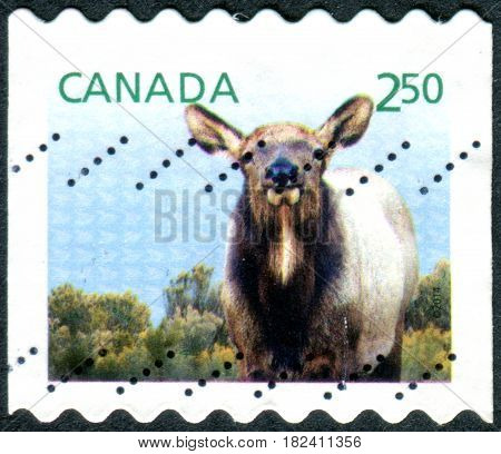 CANADA - CIRCA 2014: A stamp printed in the Canada shows the Wapiti (Cervus elaphus canadensis) circa 2014