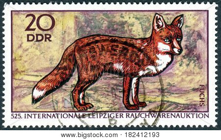 GERMANY - CIRCA 1970: A stamp printed in Germany (GDR) dedicated to International Leipzig Furs Trade Fair shows the Red Fox (Vulpes vulpes) circa 1970