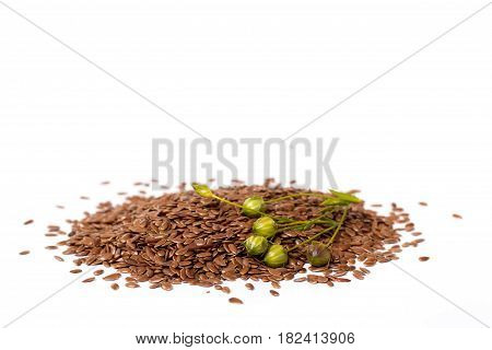 isolated flax seeds and dry flax plant capsules.