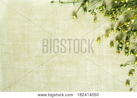 background of dry flax plant capsules on linen napkin