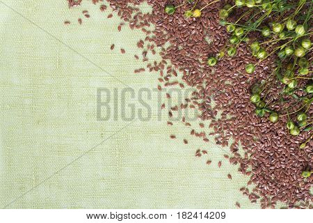 background of dry flax plant capsules and seeds on napkin.