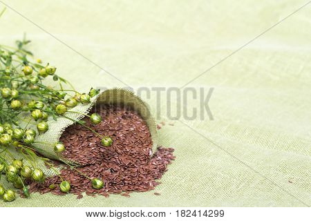 dry flax plant and seeds capsules on linen napkin