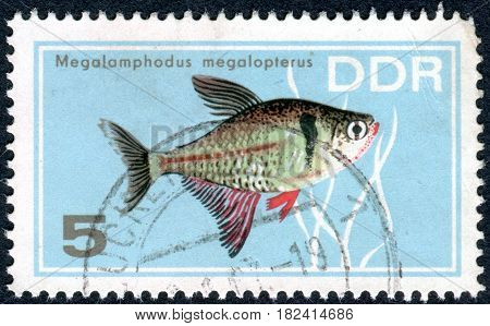 GERMANY - CIRCA 1966: A stamp printed in Germany (GDR) shows tropical fish Black Phantom Tetra (Megalomphodus megalopterus) circa 1966