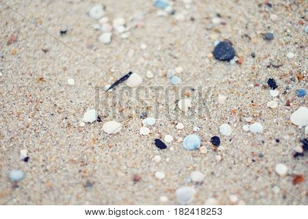 Sea Sand And Seashells