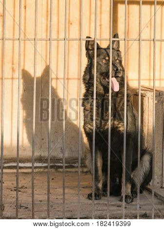 German shepherd dog sits locked in a cage behind bars. The concept of abuse with Pets.