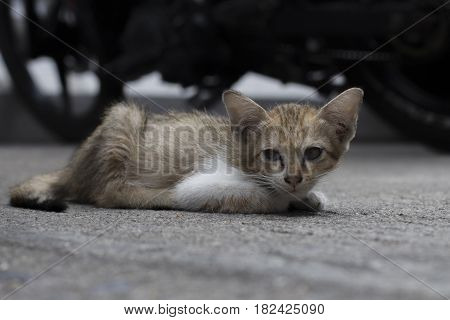 Portrait of a stray cat lying on concrete surface.