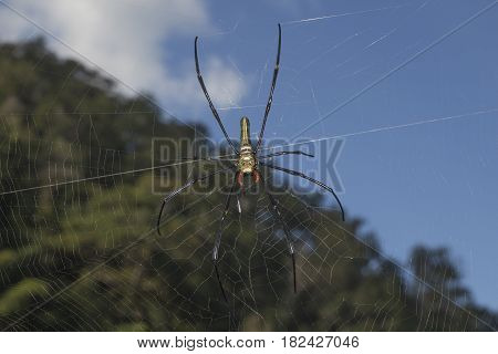 spider in the blurry natural sky background