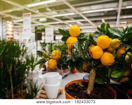PARIS FRANCE - APR 10 2017: Silhouette of customers buying flowers and pots at the IKEA Shopping furniture store in Paris France. Being founded in Sweden in 1943 IKEA is the world's largest furniture retailer.