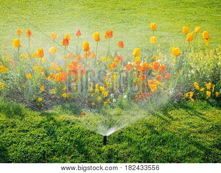 Smart garden activated with full automatic sprinkler irrigation system working early in the morning in green park - watering lawn and colourful flowers tulips narcissus and other types of spring flowers