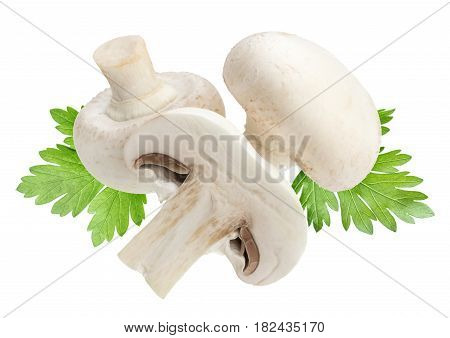 Champignon mushroom and parsley leaves isolated on white background with clipping path