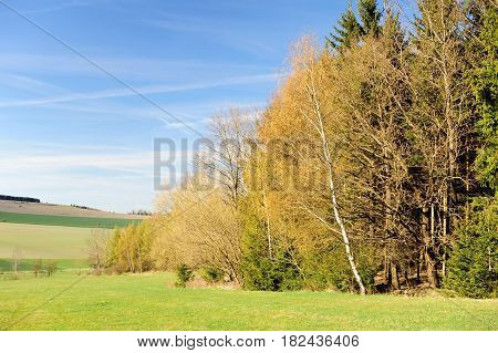 Beautiful spring landscape with forest meadow and blue sky