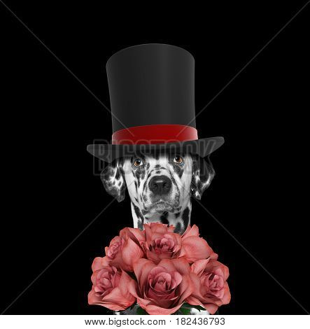 Dog in a high hat cylinder with roses -- isolated on black
