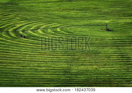 Farmfield with circle pivot irrigation sprinkler