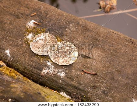 Eroded And Rusted Circle Metal Stamps Upon A Wooden Platform