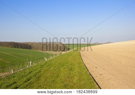 Scenic Wheat Fields And Woodland
