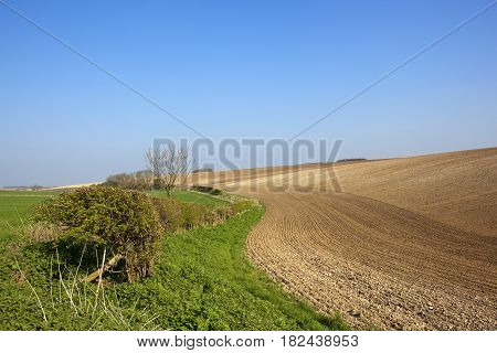 Cultivated Chalky Soil