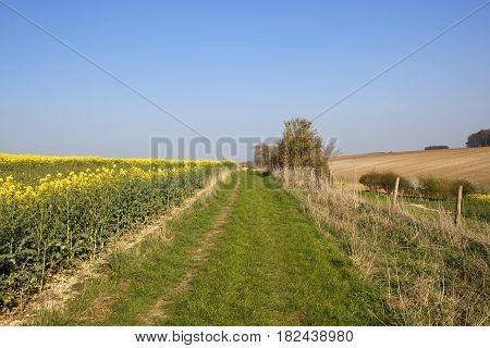 Bridleway And Farmland