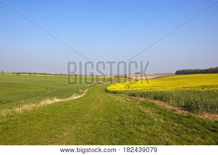 Oilseed Rape And Grassy Bridleway