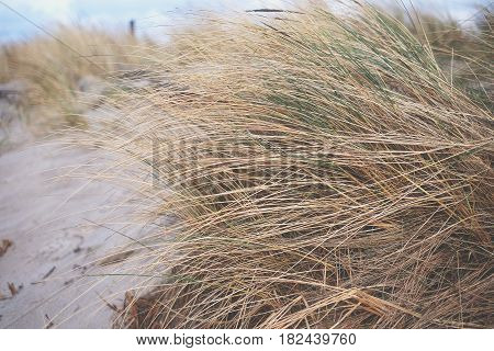 Dry Grass On The Beach