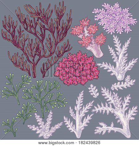 Hand drawn underwater natural elements. Sketch of reef corals. Colorful coral set isolated on grey background.
