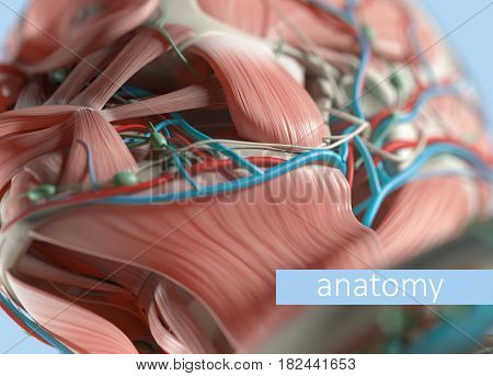 Anatomy body model extreme close-up. Selective focus. Human anatomy body head cheek & jaw. 3d illustration.