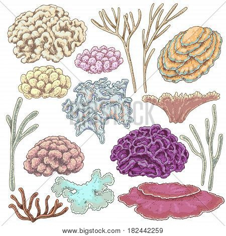Hand drawn underwater natural elements. Sketch of reef corals. Colorful coral set isolated on white background.