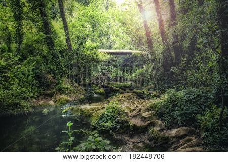 Tale landscape through which a river passes through the jungle