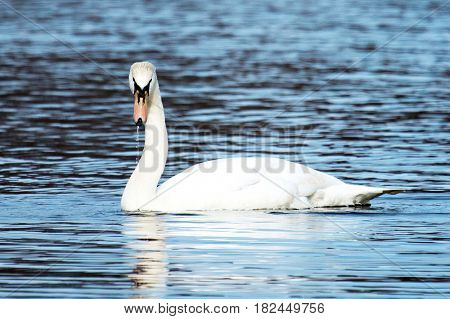 A swan turns and looks at me like I am crazy