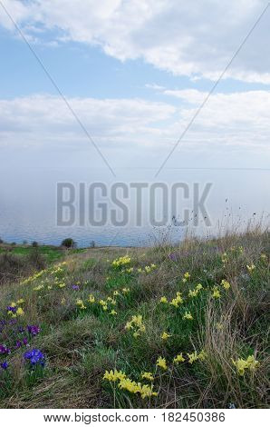 flowers on the off-shore slope of mountain