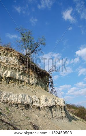 Trees on verge of precipice in an off-shore zone