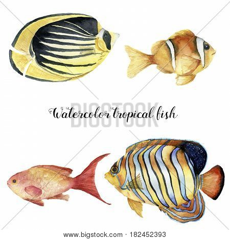 Watercolor tropical fish set. Hand painted Royal angelfish, Butterflyfish, Sea goldie and Clownfish isolated on white background. Underwater animal illustration for design, fabric or print