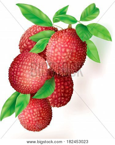 Bunch of ripe Lychees fruits and leaves on white. Vector illustration