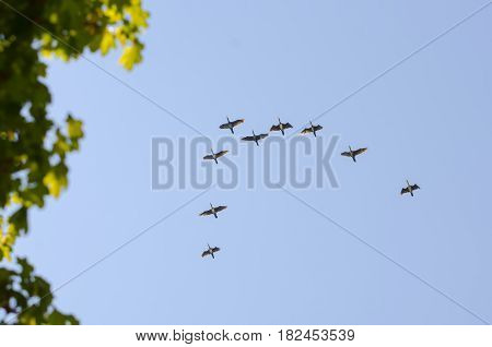 Photo of the Birds fly by jamb