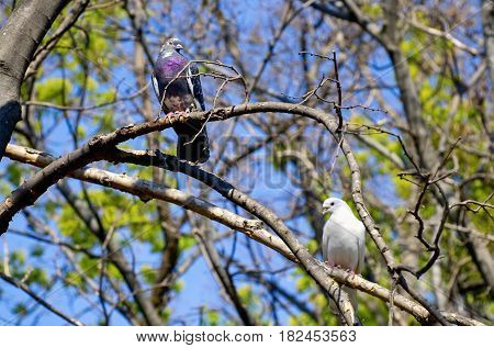 Photo of Springtime Two Pigeons in Love