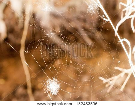 A Clear And Shining Spider Web With A Bit Of White Feather In It And A Blurred Background