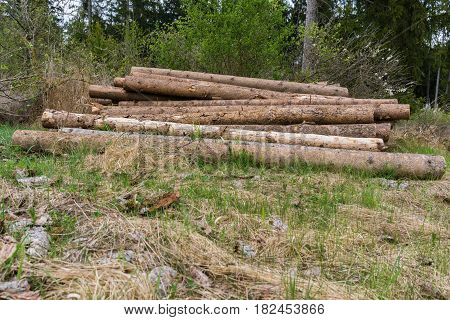 Close-up of Tree Trunks in the Forest. Stacked Tree Trunks. Felled trees. Frestry
