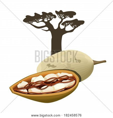 Baobab tree and fruit pod. Adansonia Isolated. Superfood baobab fruit. Vector illustration. For cosmetics, medicine, health care, ointments, perfumery, aromatherapy skin and hair care