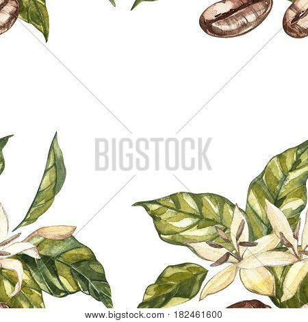 Flowers coffee arabica beans isolated, watercolor illustration. Place for text