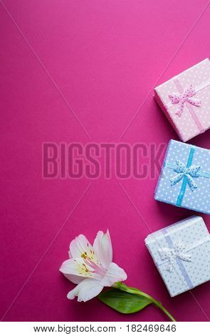 Three Gift Boxes With Single Alstroemeria Flower On Crimson Background