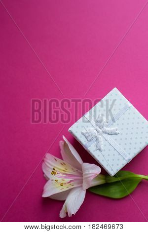 White Gift Box With Single Alstroemeria Flower On Crimson Background
