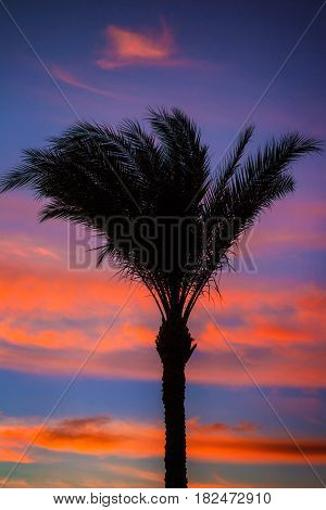 Silhouette of palm trees on tropical sunset.