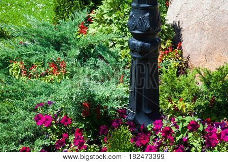 Metal lamp post in the flowerbed with pink petunias and coniferous bushes.