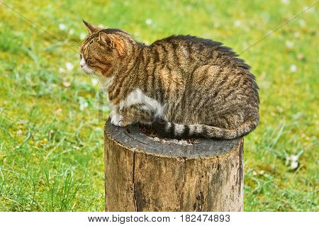 Alley Cat Resting on a Tree Stump