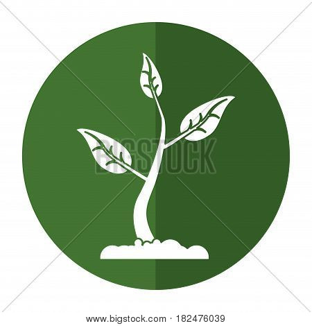 sprout growing plant eco shadow vector illustration eps 10