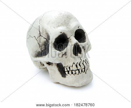 Human skull isolated on white background .