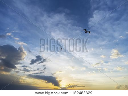 Inspirational sunrise behind three birds soaring loftily through the sky achievement and success concept