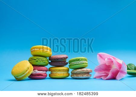 Nice display of colorful macaroons and pink tulip. Colourful macaroons, delicious pastries