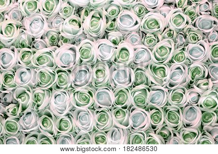 Pink and white roses as background .