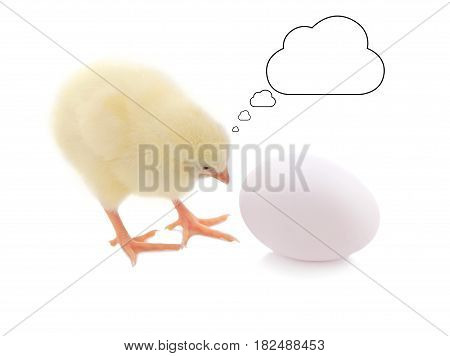 Cute chick and egg with thinking balloon on white background