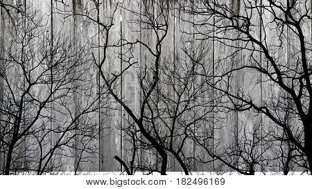 Shadow of leafless tree branches on wooden background